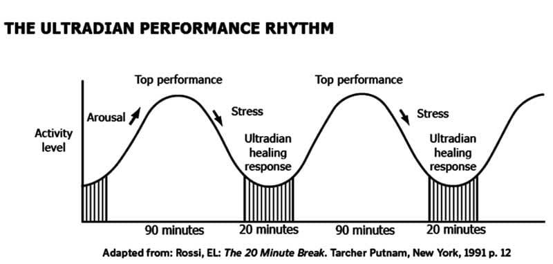 Ultradian performance rhythm